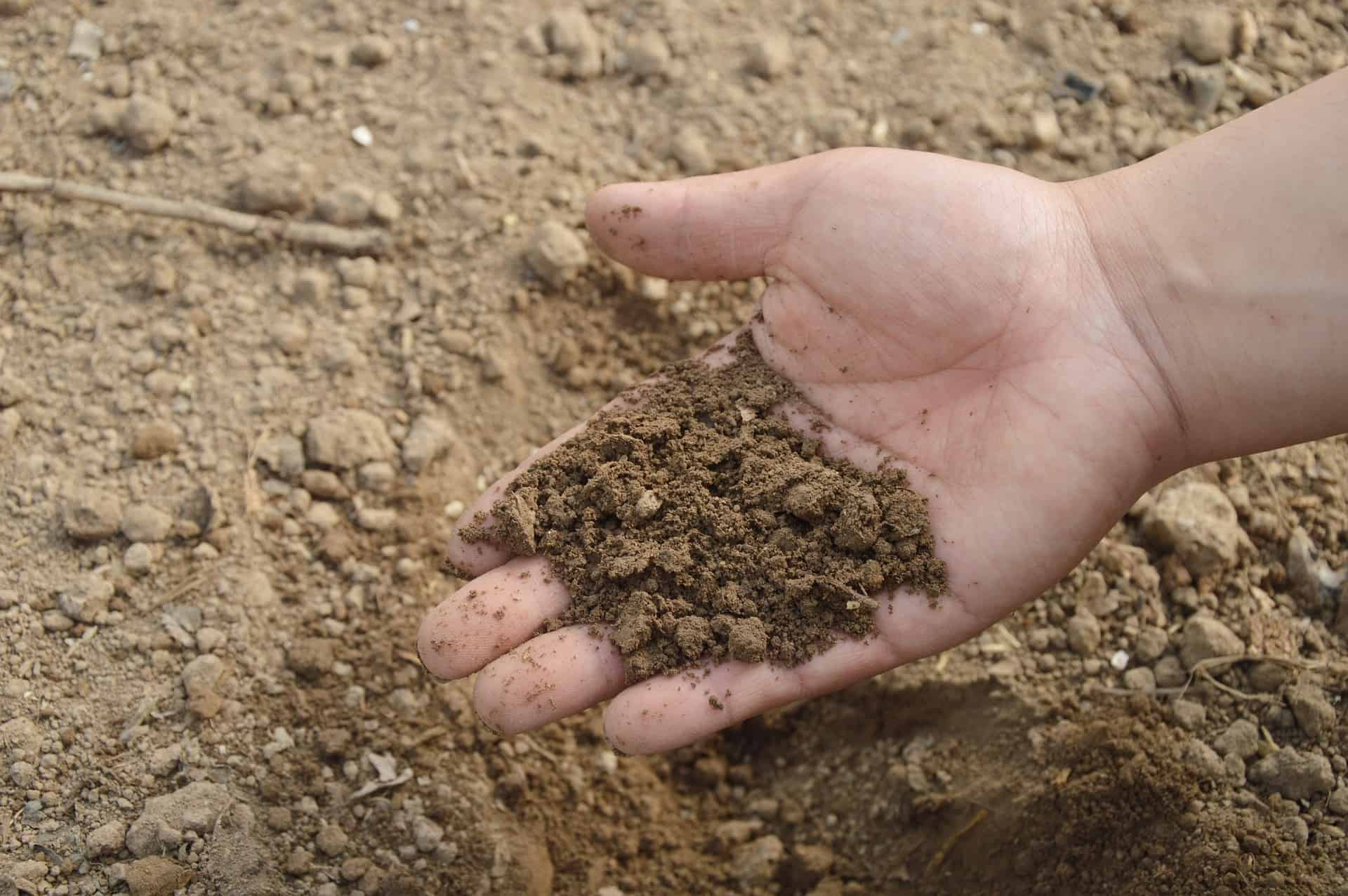 rich soil for growing plants