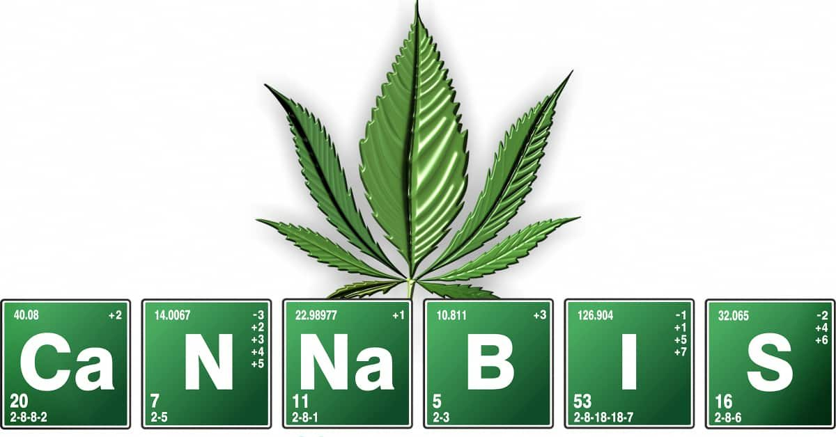 What Are The Best Nutrients For Growing & Flowering Cannabis? Buyers Guide To The Top Soil & Hydroponic Liquid Fertilizers